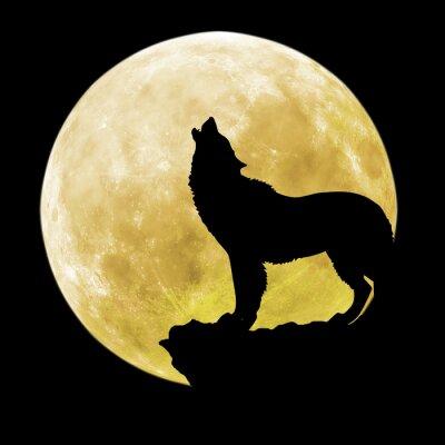 Quadro Silueta, lobo, frente, lua