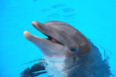 Quadro Śmiejący się w delfin Loro Parque na Teneryfie