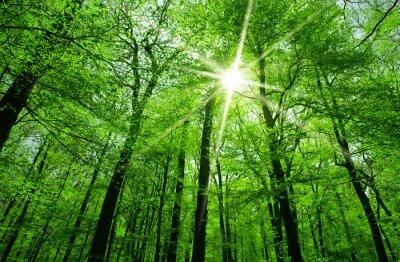 Quadro sol que brilha através das filiais de árvore