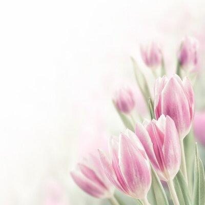 Quadro Spring Background with Tulip