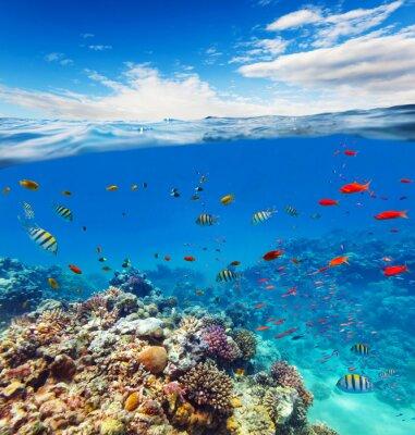 Quadro Submarinas, Coral, recife, horizonte, água, ondas