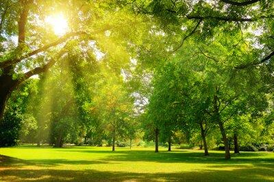 Quadro Sunrise beam in the beautiful park.