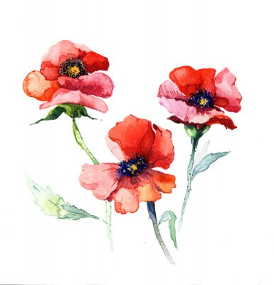 Quadro the spring flowers poppy painting watercolor isolated on the white background