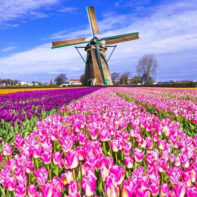 Quadro Tradicional, Holanda, campo, moinhos vento, tulips