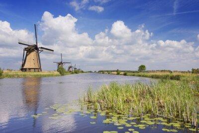 Quadro Tradicional, holandês, moinhos de vento, ensolarado, Dia, Kinderdijk