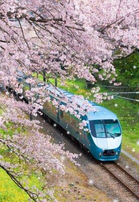Quadro Trem do Japão em soma de cerejeira sakura seasom na cidade de Yamakita, prefeitura de Kanagawa