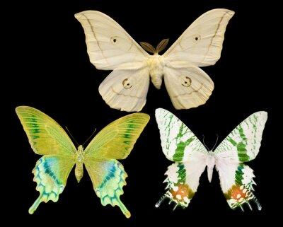 Quadro Três, borboletas, isolado, pretas