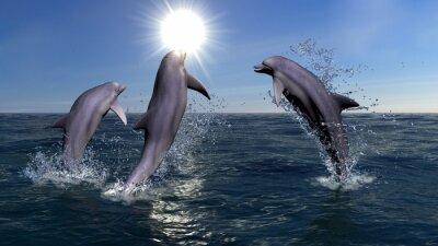 Quadro Três golfinhos