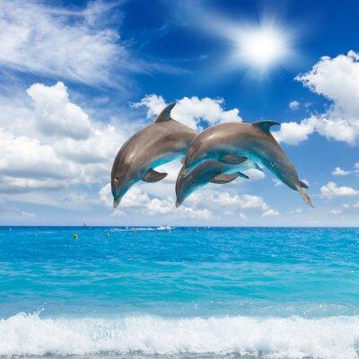 Quadro três golfinhos que saltam