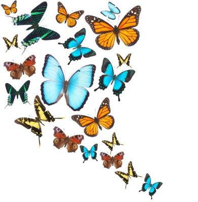 Quadro Tropical, borboletas, jogo