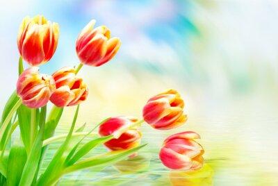 Quadro Tulipa, flores, fim, cima