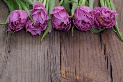 Quadro Tulipânia