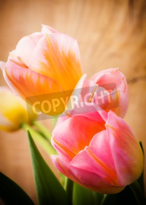 Quadro Tulipas, fundo floral.