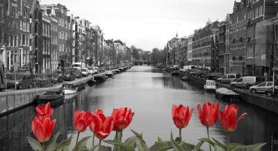 Quadro tulipas vermelhas em amsterdam
