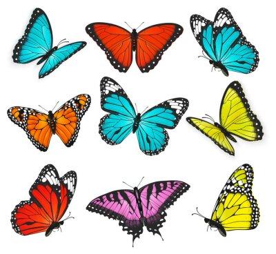 Quadro um conjunto de borboletas coloridas ilustração realista