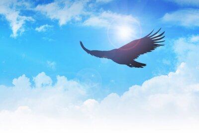 Quadro Um vôo da águia no ar