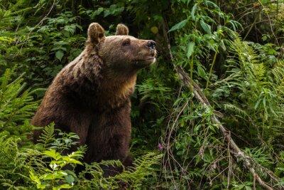 Quadro Urso-europeu