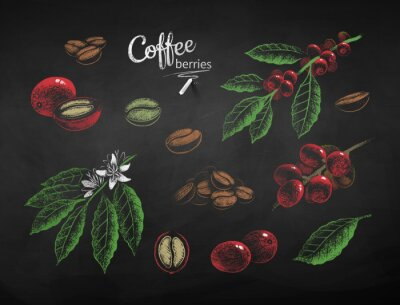 Quadro Vector chalk drawn set of coffee illustrations