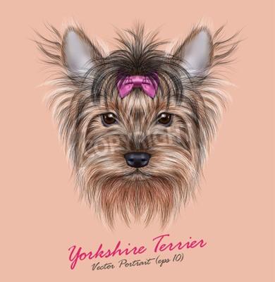 Quadro Vector o retrato de um cão doméstico. Cabeça bonito do yorkshire terrier no fundo do sibilo.