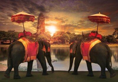 Quadro vestir elefante com acessórios reino thai tradição standi
