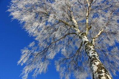 Quadro Vista do céu de inverno