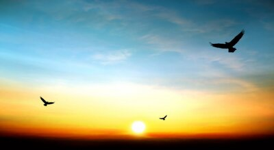 Quadro Vôo da águia no céu belo pôr do sol