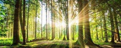 Quadro Wald Panorama mit Sonnenstrahlen