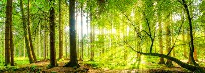 Quadro Waldpanorama com raios de sol