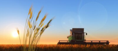 Quadro wheat harvester