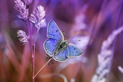 Quadro Маленькая бабочка среди травы в сиреневых тонах