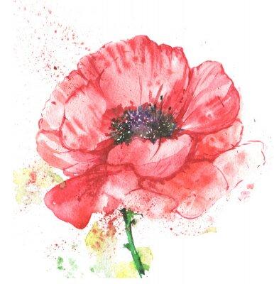Quadro Красный цветок, мак, иллюстрация акварелью