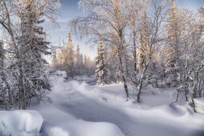Quadro Зимняя лесотундра